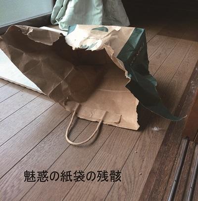 紙袋の魅力 (1)