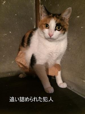 紙袋の魅力 (2)