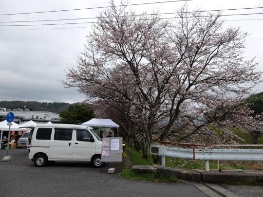 sakura_20170408j_003.jpg