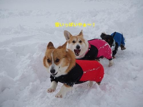 雪いっぱいやぁ