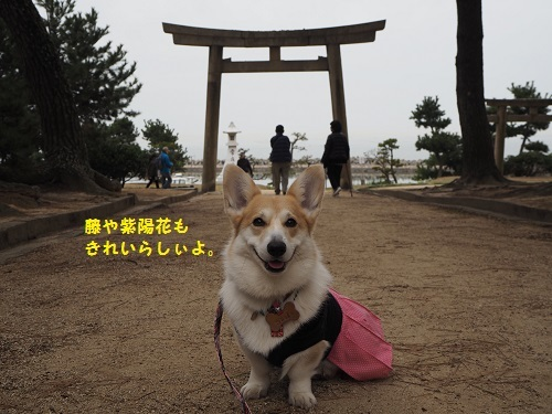 富士、紫陽花みたいね