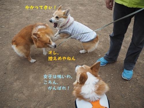 かかってきぃ