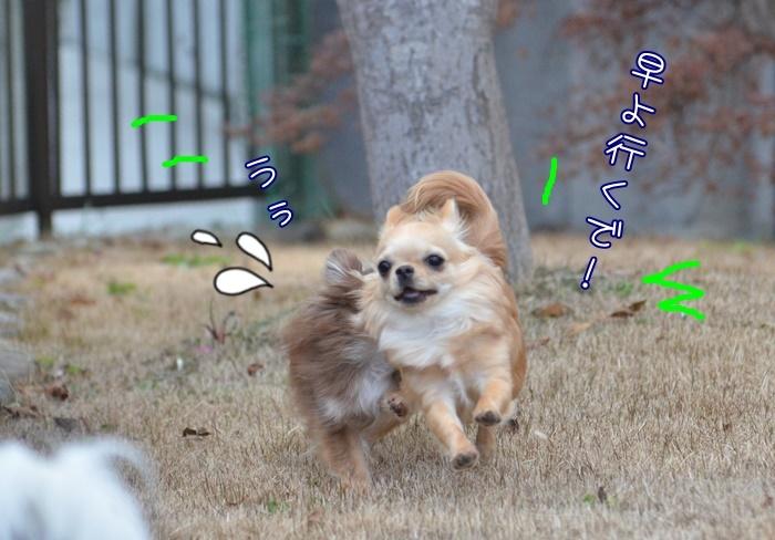 DSC_6832.jpg