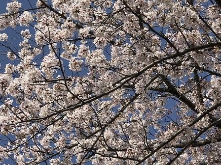 18-03-31_1436.jpg