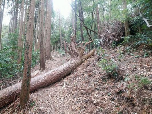 登山道への倒木