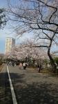 谷中の桜2018年3月26日その2