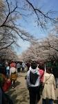 上野公園上野公園の桜2018年3月26日その2