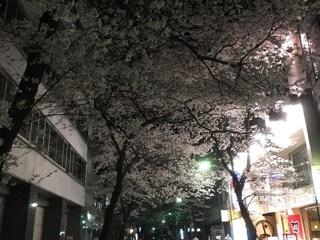 五反田の夜桜