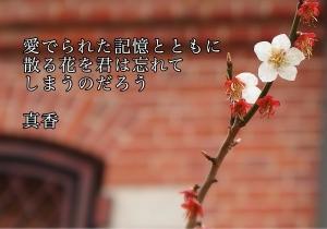 IMG_7829.jpg