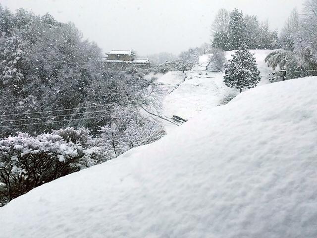 snow-haru1.jpg