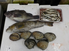 6鮮魚セット2018220