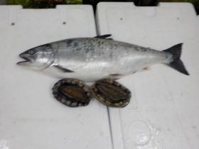2鮮魚セット2018301