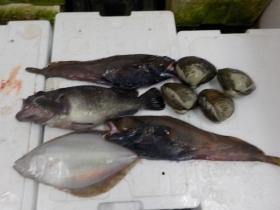 8鮮魚セット2018301