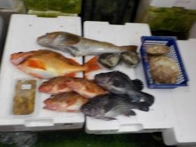 10鮮魚セット2018301