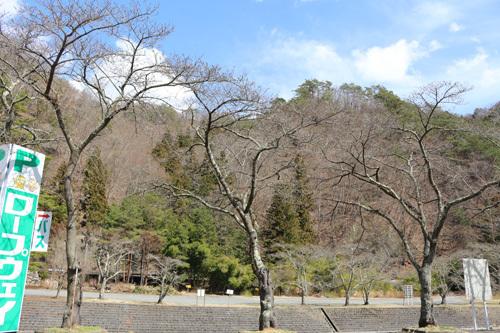 20180324昇仙峡 滝上市営駐車場付近の桜 (5)