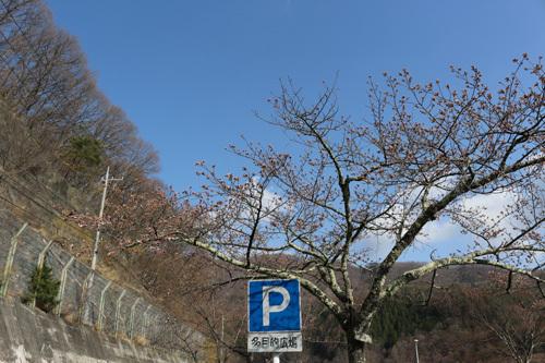 20180331荒川ダムの桜 (5)