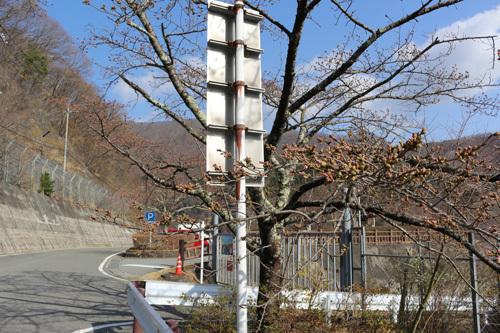 20180331荒川ダムの桜 (6)