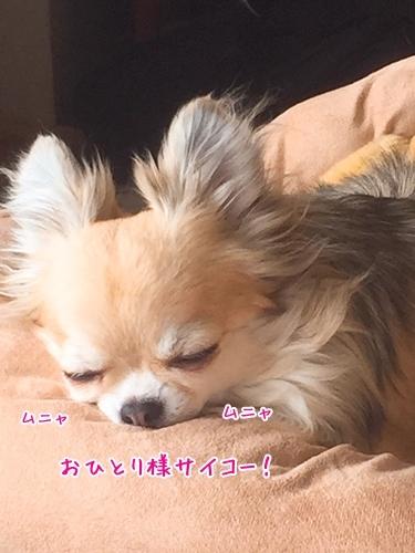 IMG_9324.jpg