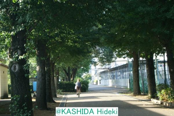 相原高校の散策路