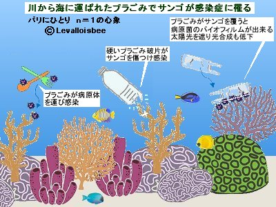 サンゴが感染症に