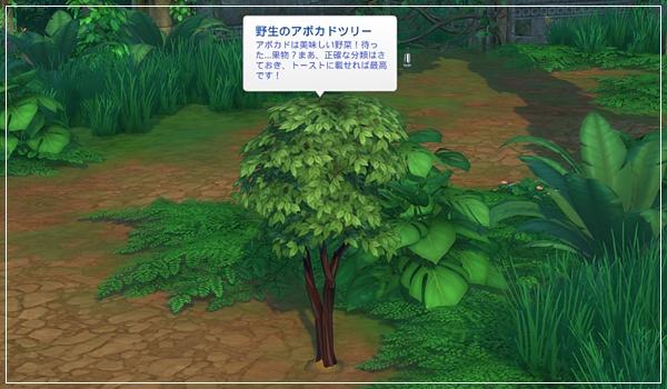 TS4_JungleTrial-65.jpg