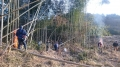 竹伐採2月