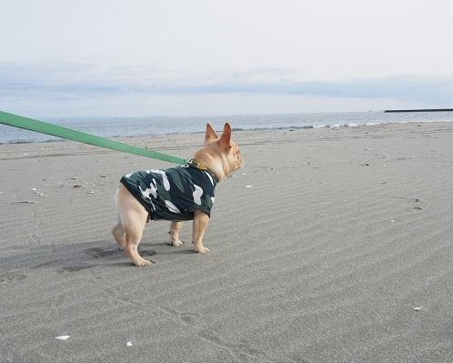 海散歩11