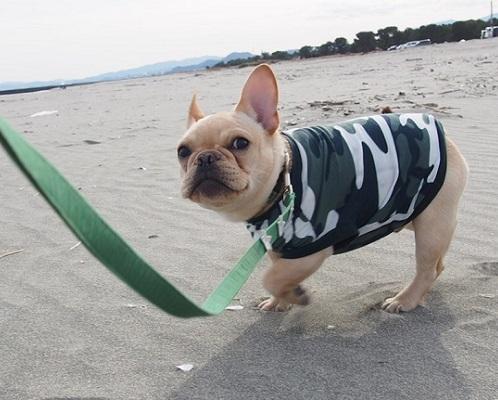 海散歩12