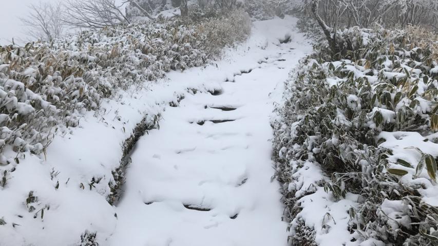 登山道は残雪の上に新雪が乗る