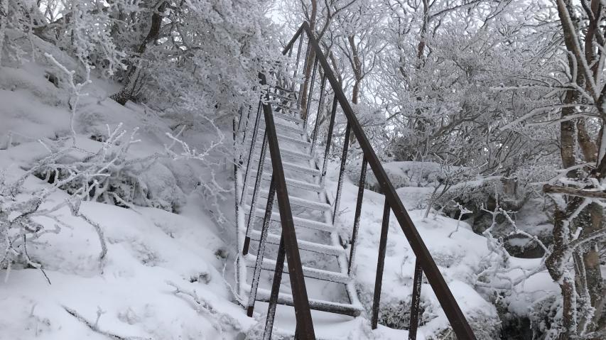 夏道を避けて梯子階段ルートを行く
