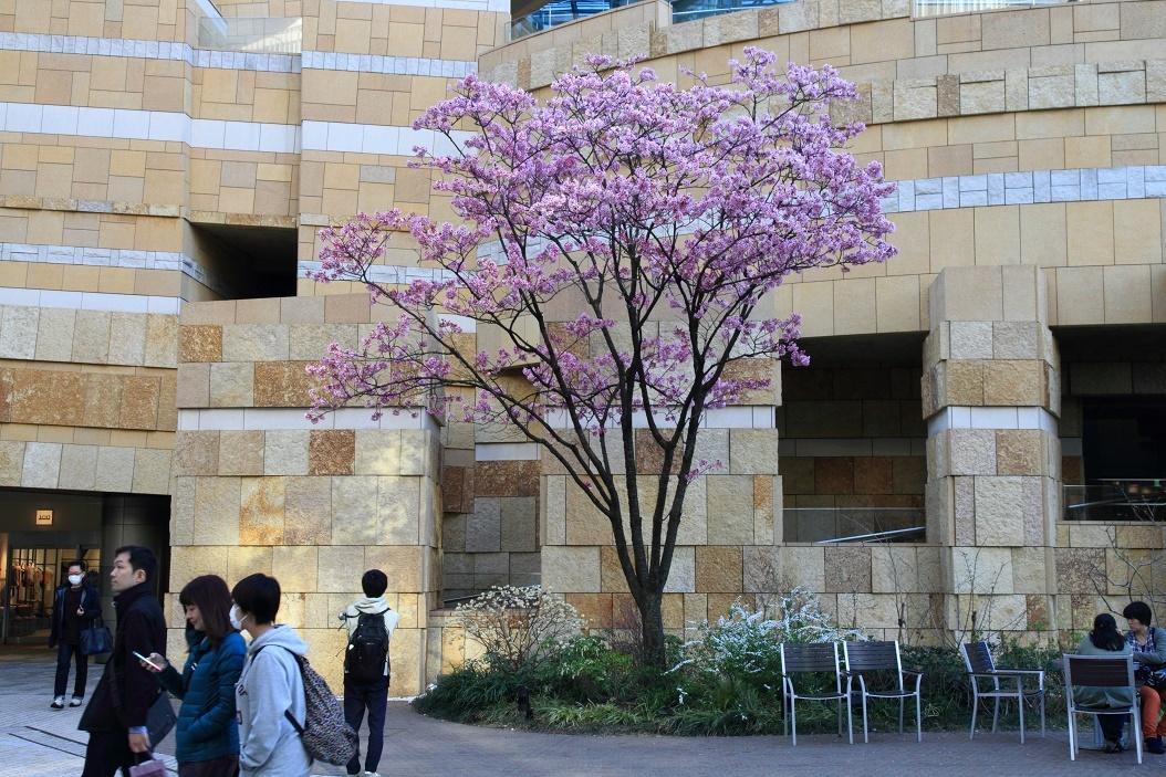 六本木ヒルズの花18①