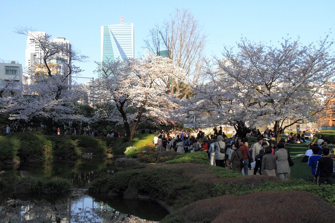 毛利庭園の桜18①