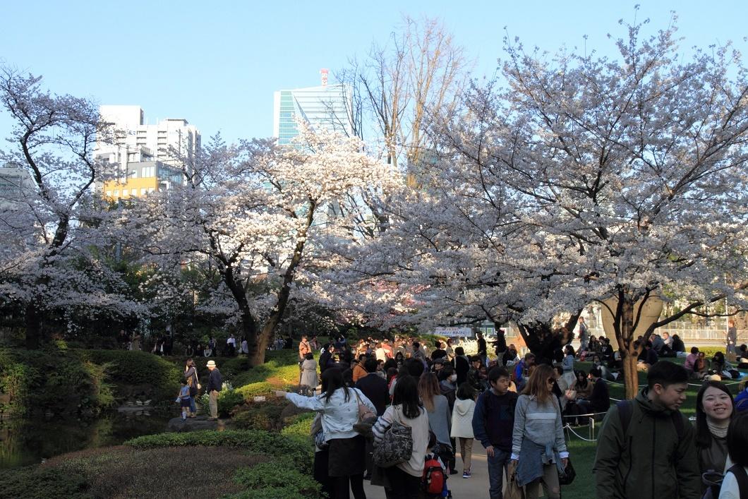 毛利庭園の桜18②