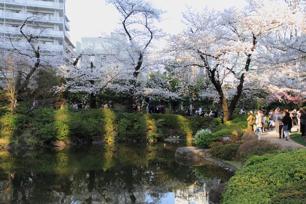 毛利庭園の桜18③