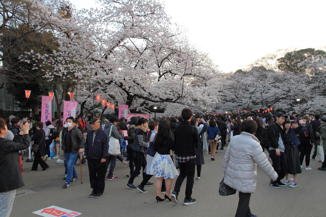 上野公園の桜18①