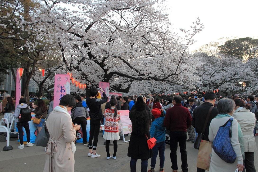 上野公園の桜18②