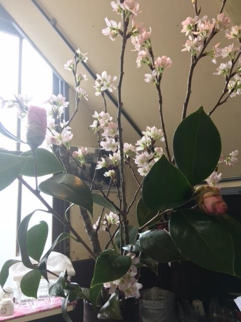 ラヴィアンカフェ桜