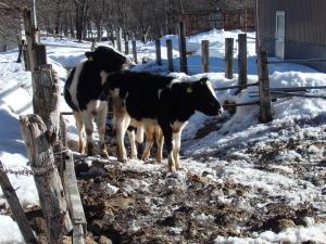 2頭の子牛さん