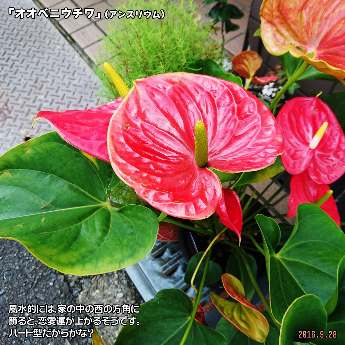 DSC_0032_2_20180310201326dc7.jpg