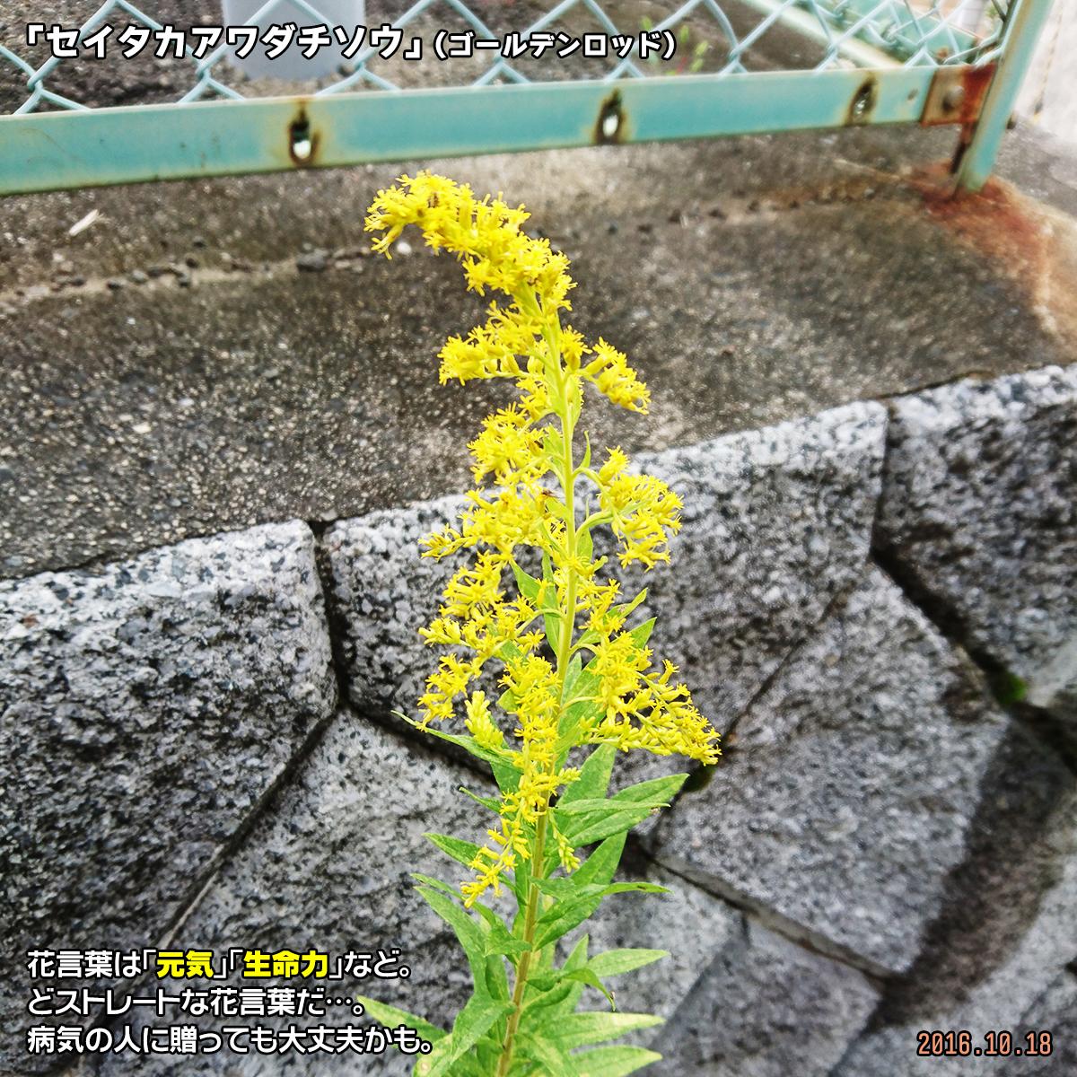 DSC_0250_2.jpg