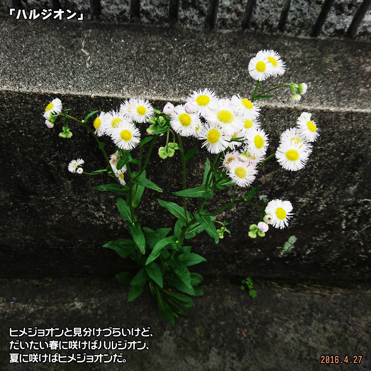 DSC_0592_2018031116495622d.jpg
