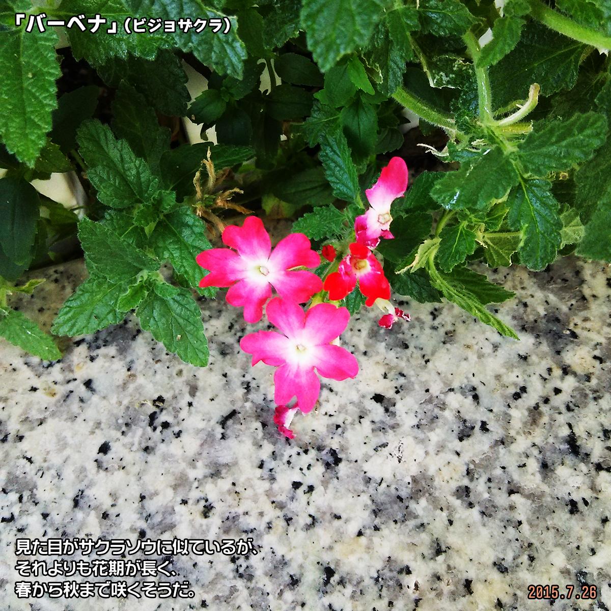 DSC_0789_20180320181126b3d.jpg