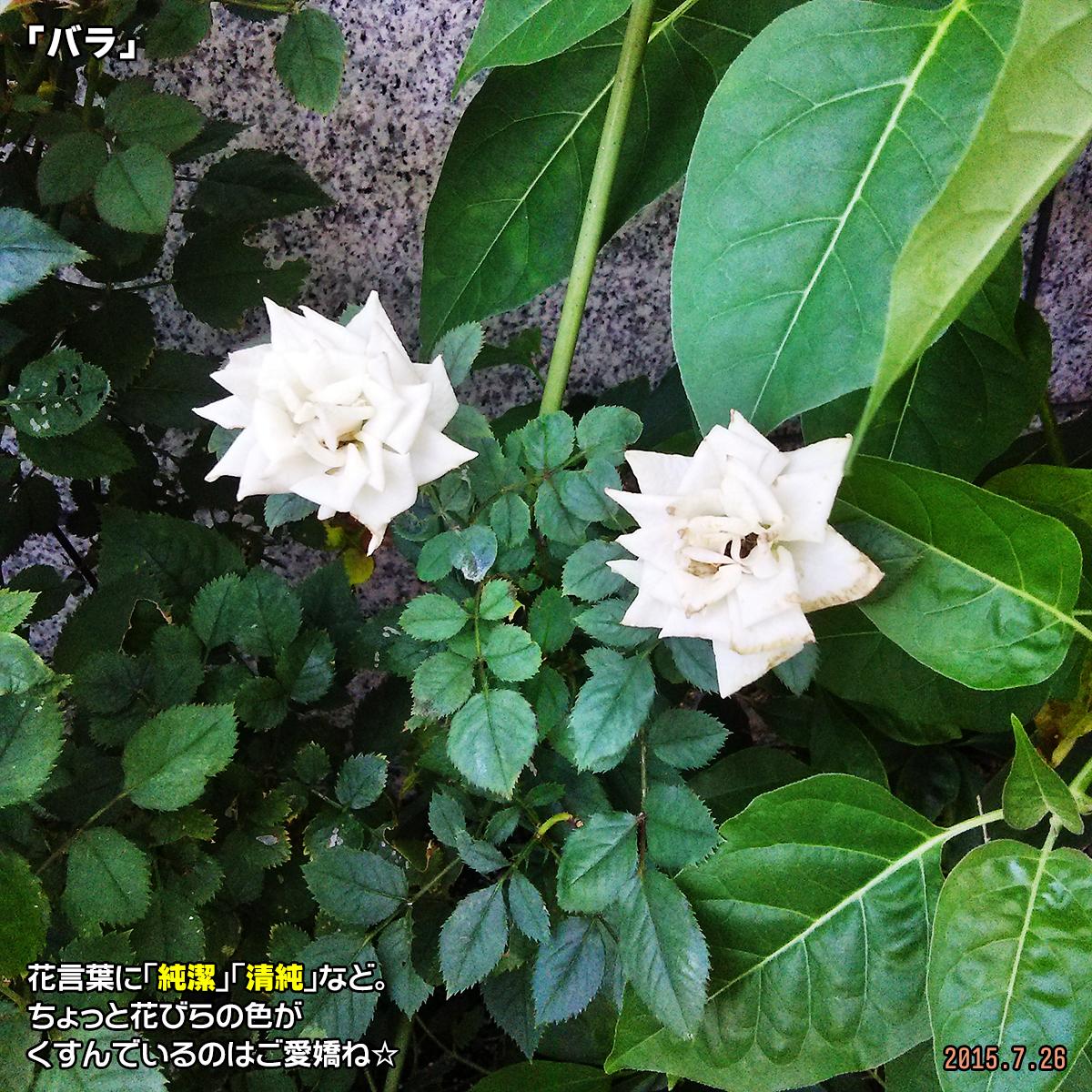 DSC_0791_20180308161734750.jpg