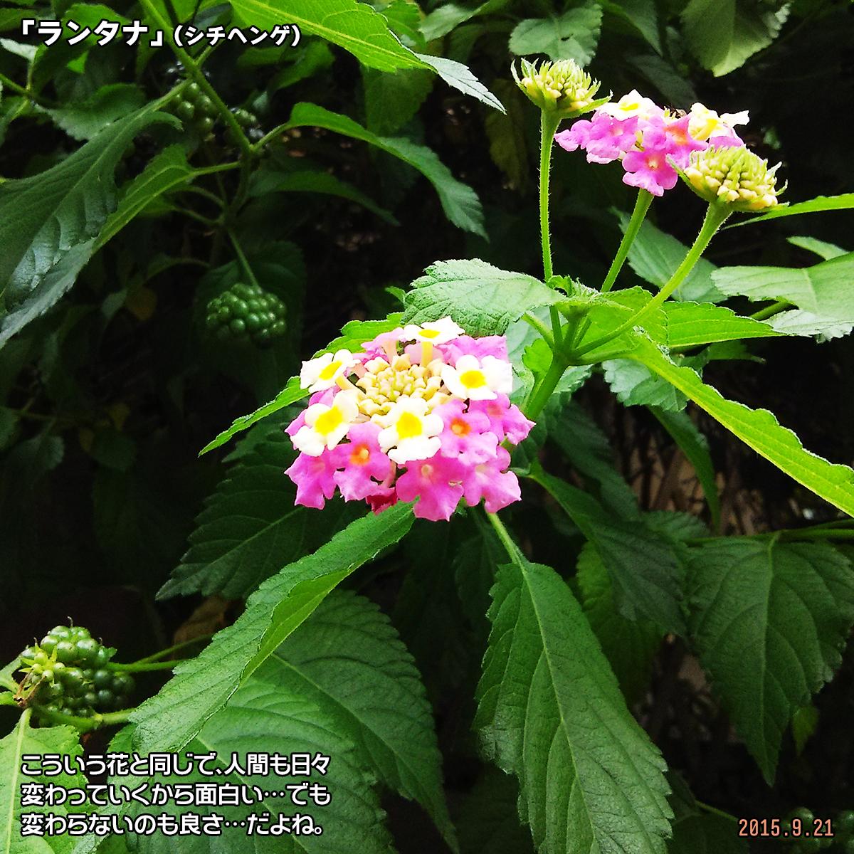 DSC_1136_20180323173827062.jpg