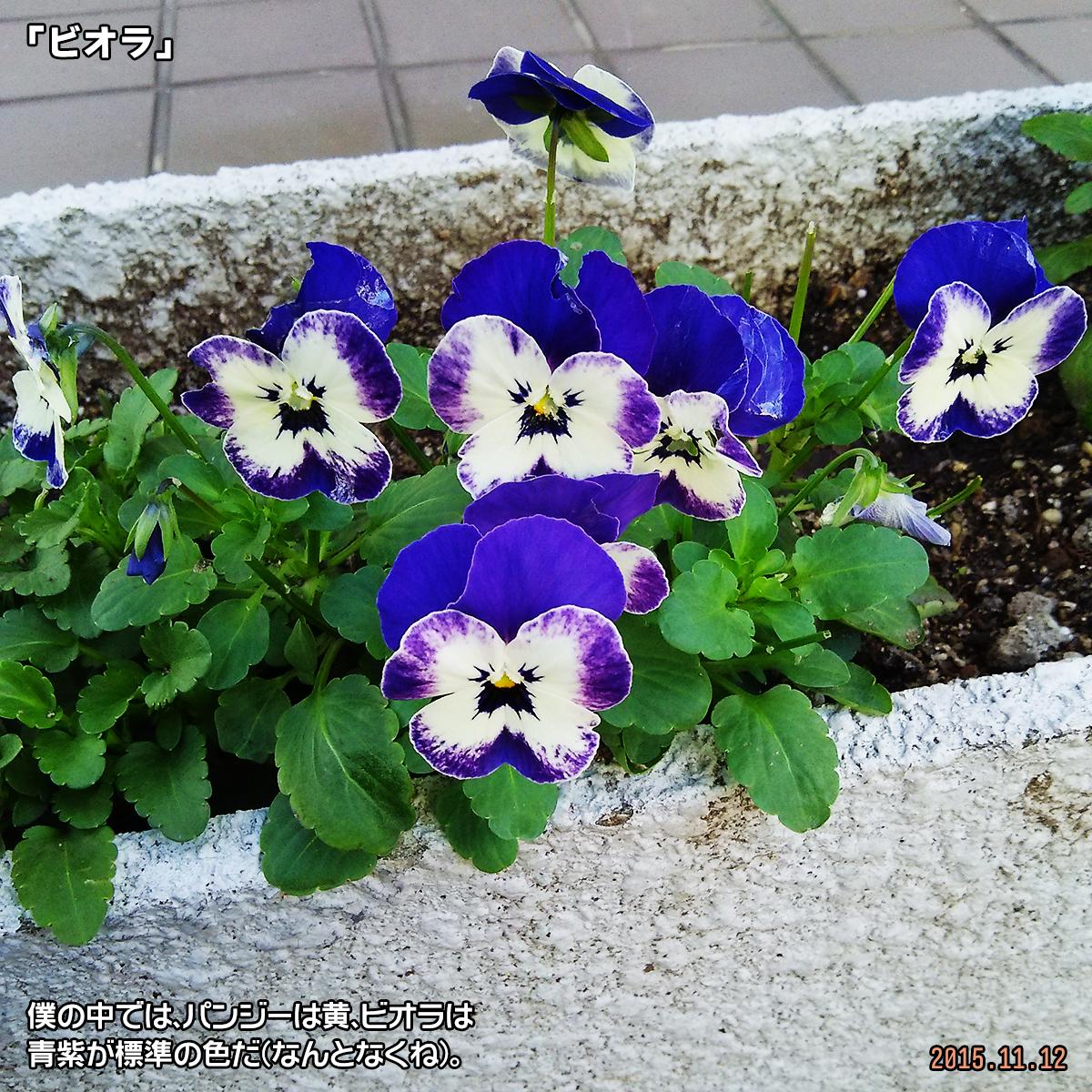 DSC_1434.jpg