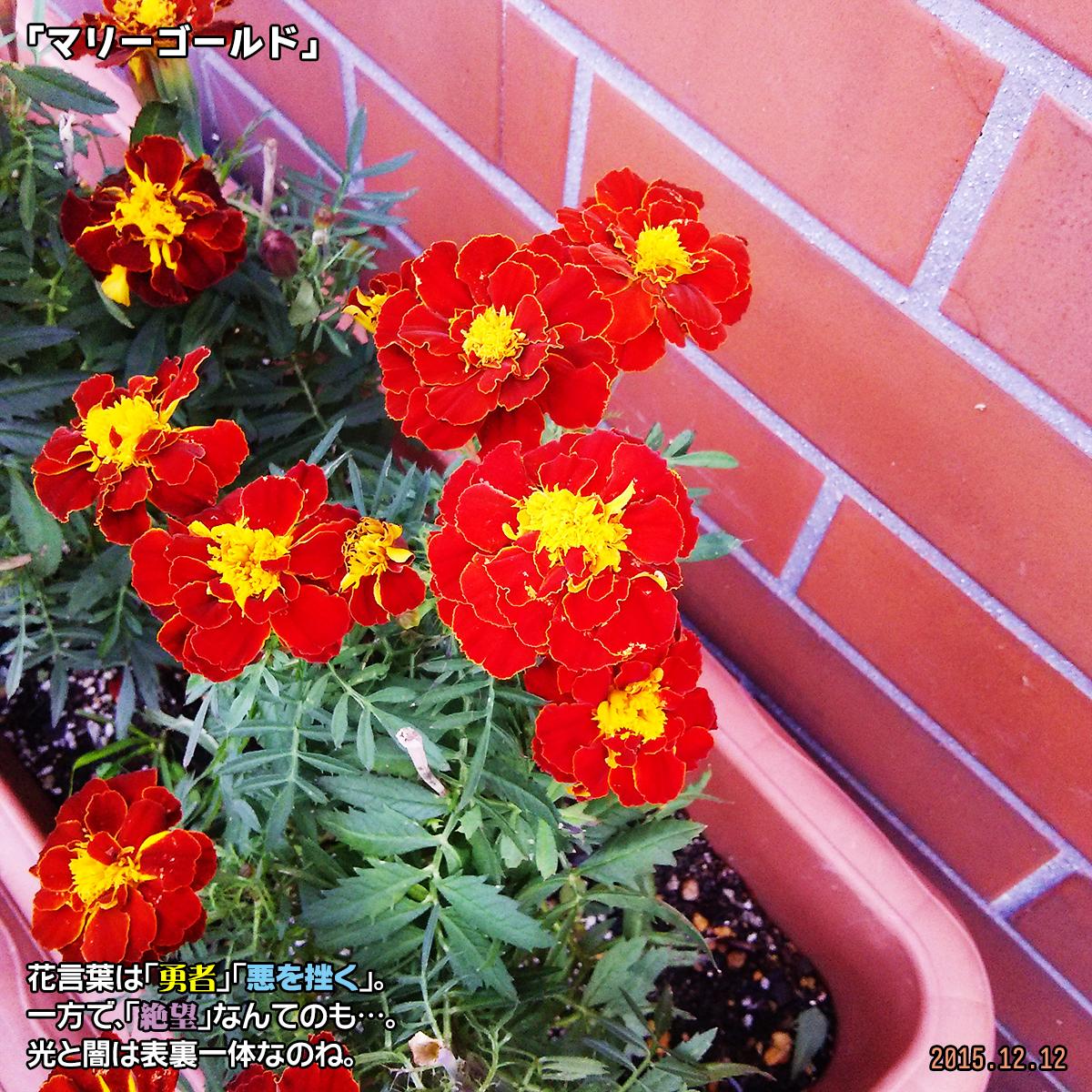 DSC_1661_20180324202000b91.jpg