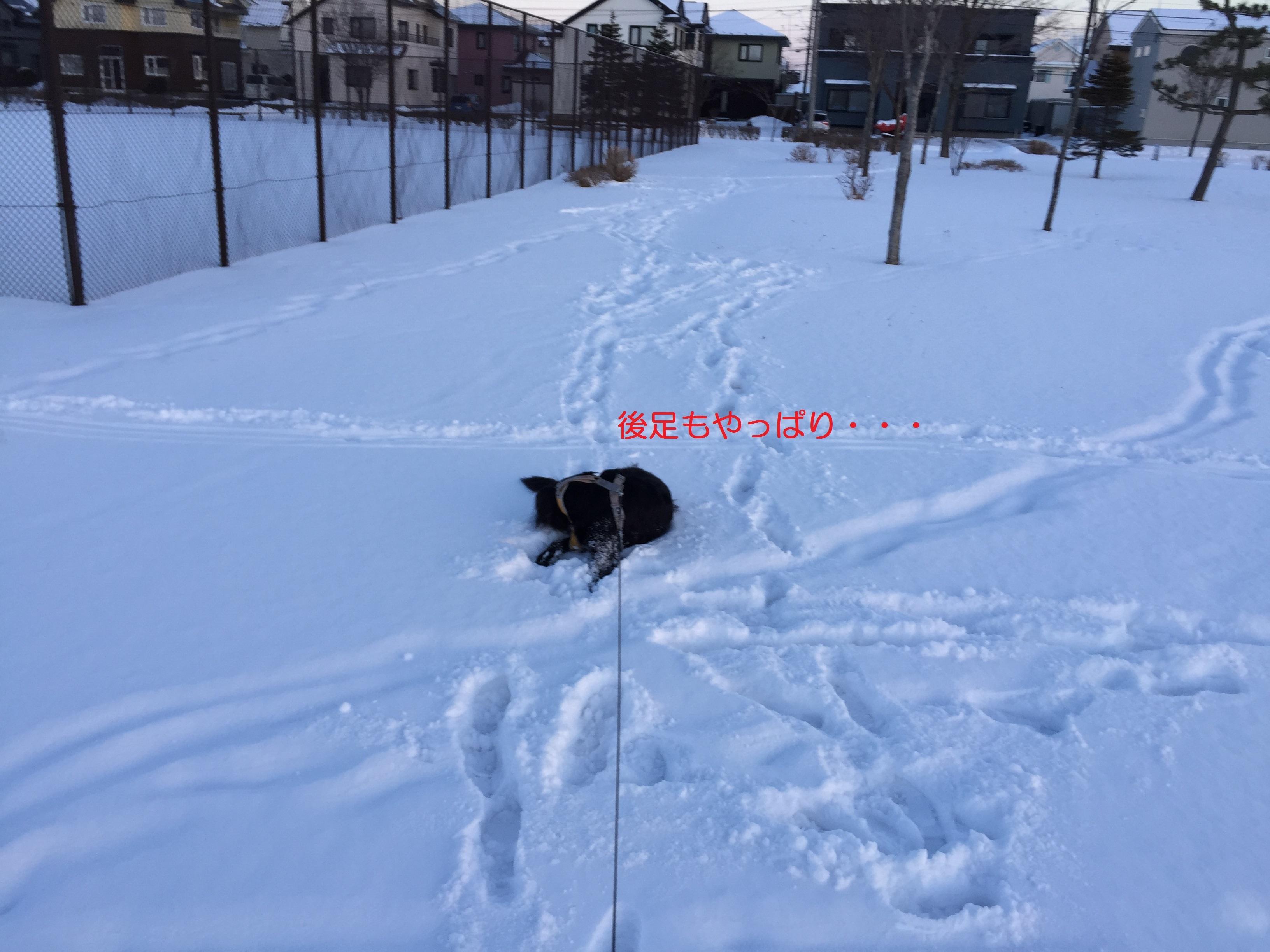 IMG_1408-2.jpg