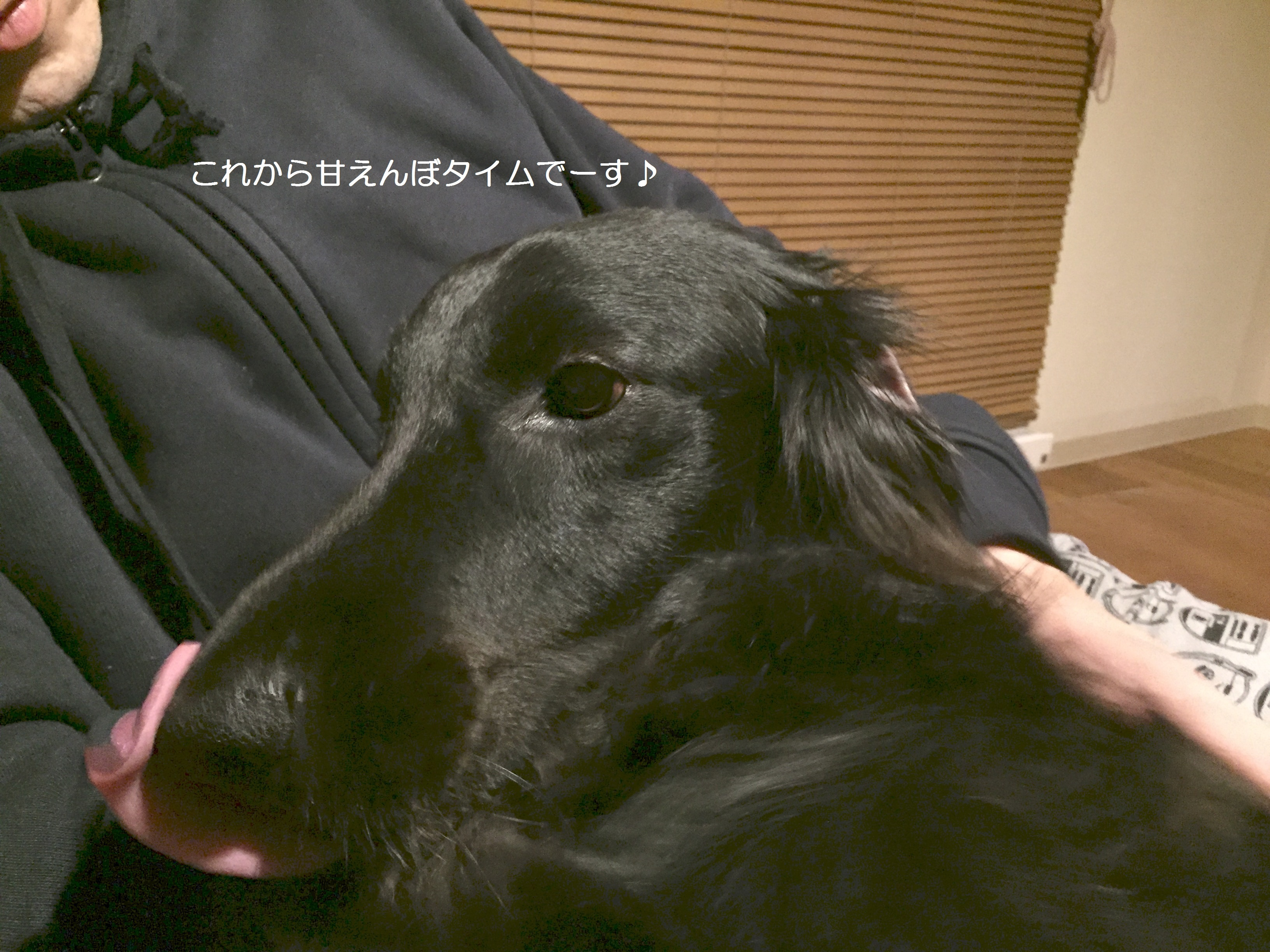 IMG_1441-2.jpg