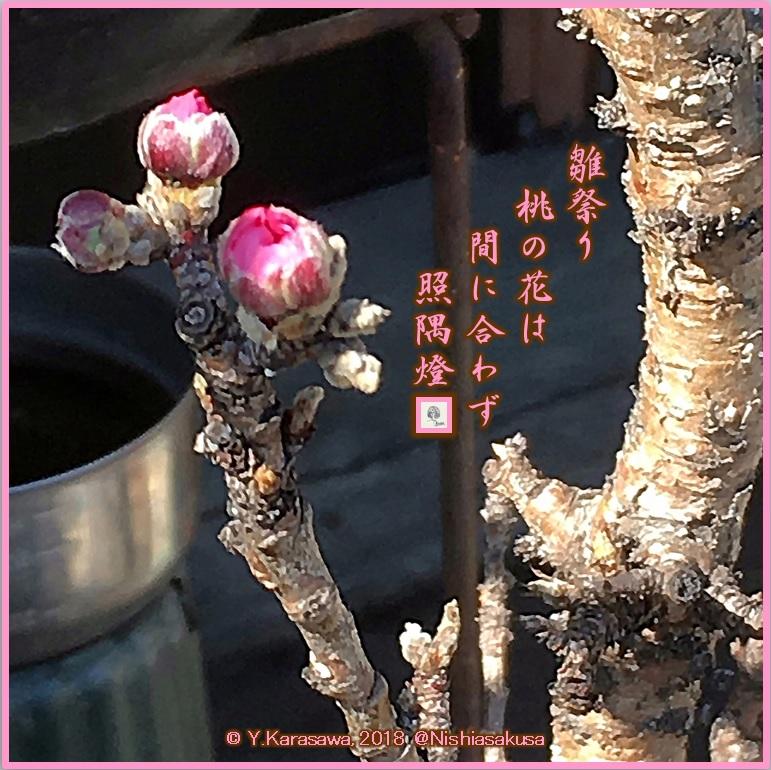 180303桃の蕾LRG