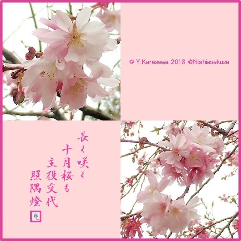 180321十月桜LRG